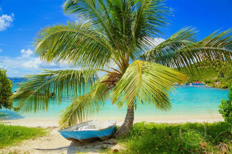 Jost van Dyke palm