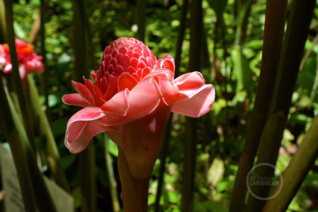 Diamond Falls Botanical Gardens St. Lucia